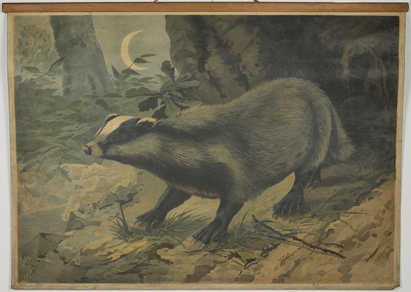 Mäyrä eli veljesten kielellä metsäsika.